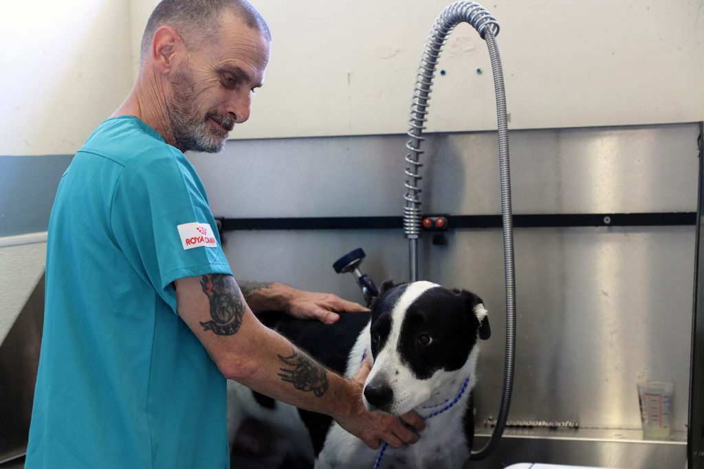 Affordable and high-quality veterinary care