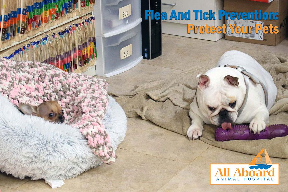 flea and tick prevention
