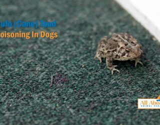 toad poisoning in dogs