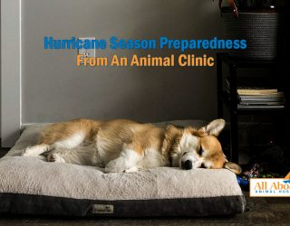 all-aboard-animal-clinic