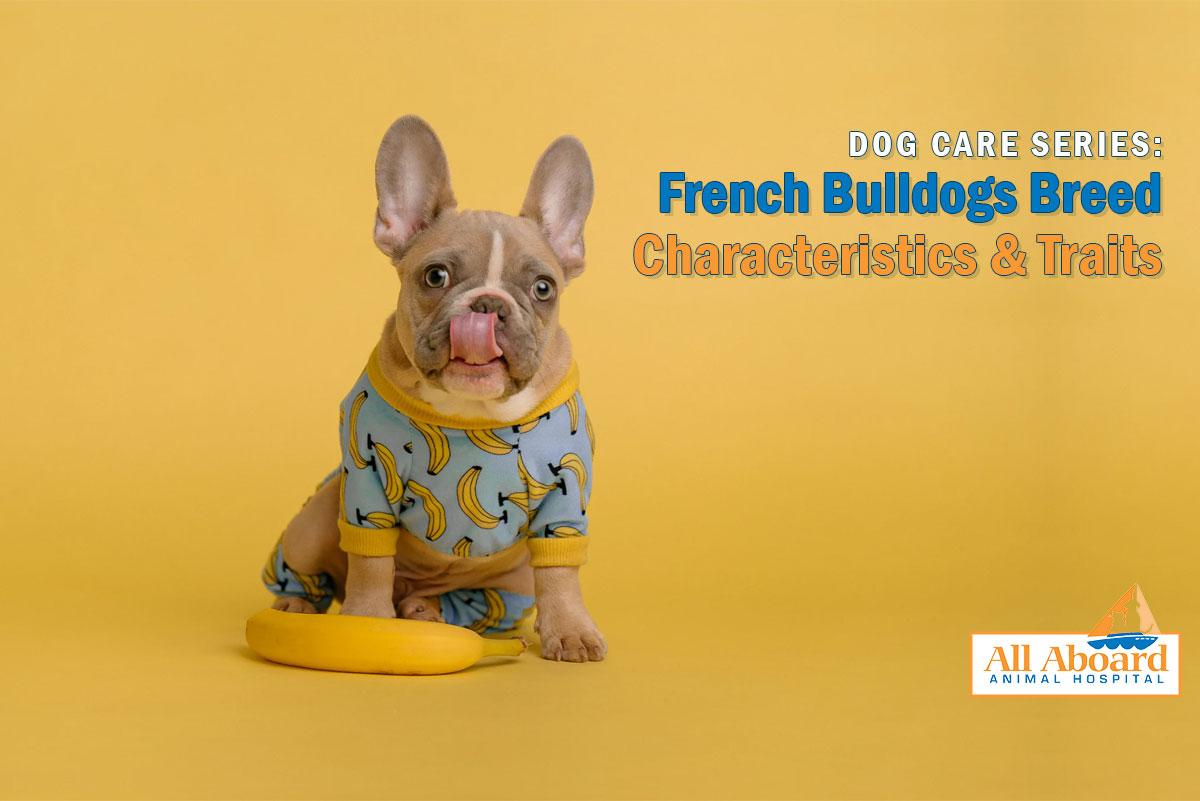 dog breed characteristics