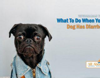 Veterinarian Tips: doggy diarrhea