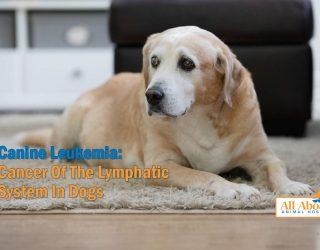 canine Leukemia
