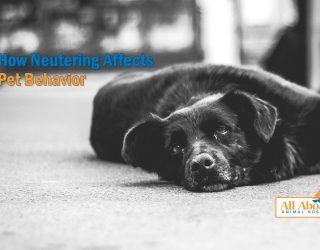 how neutering affects pet behavior