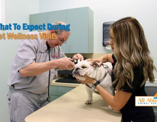 pet wellness visits