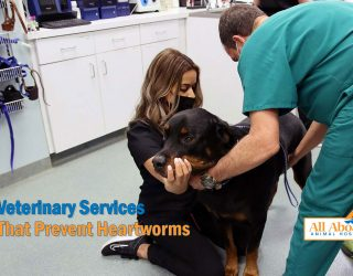 veterinary services that prevent heartworms