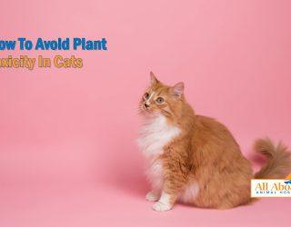 plant toxicity