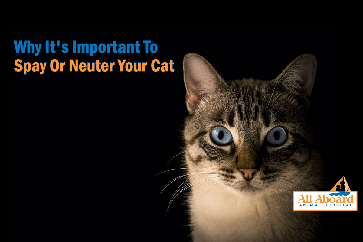 spay or neuter your cat